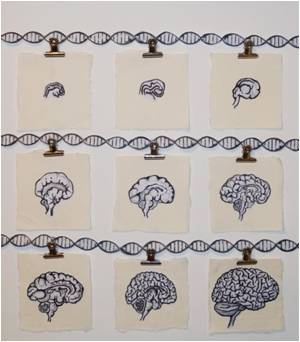 Schizophrenia-Associated Genetic Variants Affect Gene Regulation in Developing Brains
