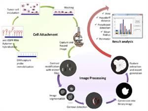 Novel Cancer Cell Detection Method Based on Real Time Cell Behavior