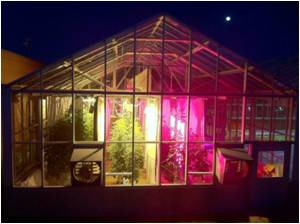 LED Lighting Treatments Can Affect Greenhouse Tomato Quality