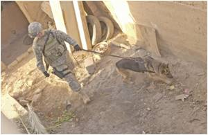 Insurgency Phase of Iraq War Tied to Higher PTSD Rates