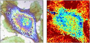 Researchers in France Working on Thermal Microscopy of Single Cells