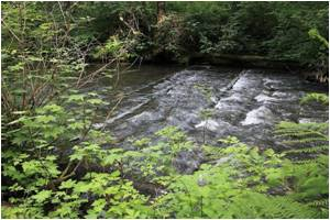 Studies Reveal Benefits of Habitat Restoration for Fish