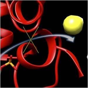 Molecule 6S Reduces Brain Damage in Stroke Victims