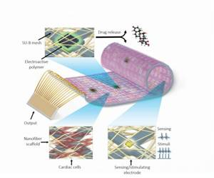 Cyborg Heart Patch may Change the Field of Cardiac Research