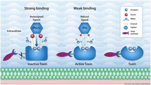 Hydrogen-Bonding Pairing Helps Design Better Drugs to Neutralize Gut Inflammation