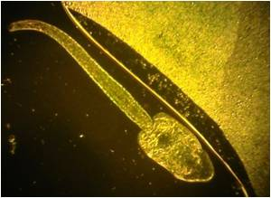 Pesticides can Kill Amphibian Parasites
