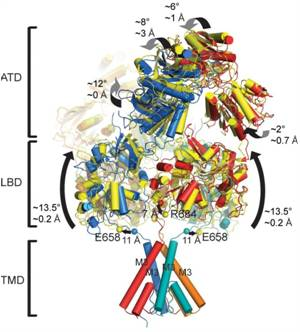 Structural Views of the NMDA Receptor Will Aid Drug Development