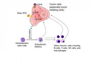 Breast Cancer Tumor Has Diverse Growth-initiating Cells