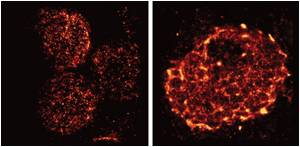 Super-Resolution Microscopy Reveals Details of Vital Receptors on Immune Cells