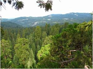 Functional Traits of Giant Sequoia Crown Leaves Respond to Environmental Changes