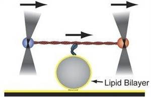 A Better Understanding of Cell and Tissue Development