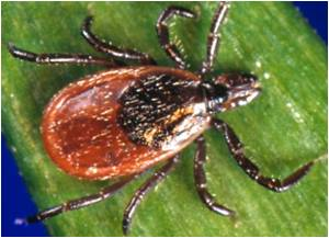 Methods to Suppress Ticks That Transmit Lyme Disease