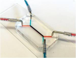 University of Pennsylvania Researchers Develop Placenta-On-A-Chip