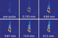 Research: Diffusion of a Soluble Protein Through a Sensory Cilium