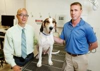 New Drug to Treat Lymphoma Shows Promise When Tested on Dogs