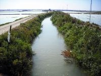 Cocaine Found in L'Albufera in Valencia
