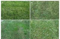 Scientists Compare Turfgrass Fertility, Pesticide Programs