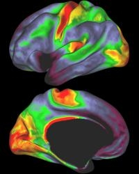 Probing The Brain's Nooks And Crannies Easier With Improved Brain Maps