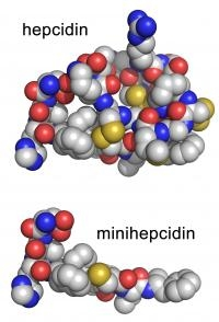 Experimental Treatment for Iron-overload Diseases Designed
