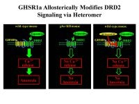 Research Finds Ghrelin Receptor Alters Dopamine Signaling
