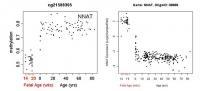 NIH Study: Gene Regulator Within Brain's Executive Hub Tracked Across Lifespan