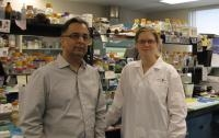 Animal Study Sheds Light on New Approach for Treating Genetic Muscle Wasting Disease