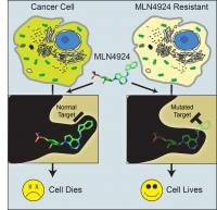 Cancer Drug's Secret to Resistance Discovered