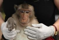 New Technique Spots Tuberculosis in Non-human Primates