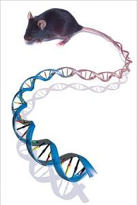Mapping The Functional Genome, Going Past the Base Pairs