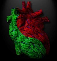 The Way Cardiovascular Drugs are Made Could Be Changed By The Discovery of New Heart Failure Trigger
