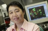 Receptor Vital for Development of Insulin Producing Cells Identified