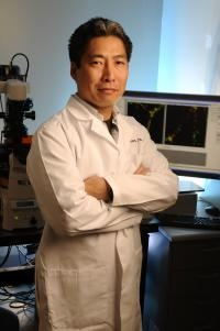 Cancer Drugs Could Be Made More Effective Using Protein That Helps Tumor Blood Vessels Mature