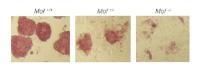 Stem Cells - New Findings