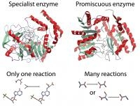 UCSD Researchers Claim Enzyme Evolution Not Yet Perfect
