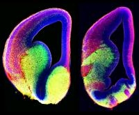 How Neurons Get to the Right Place at the Right Time