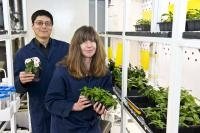 Research Sheds Light on Gateway Enzyme for Chemicals from Catnip to Cancer Drug