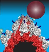 Cellular 'Traffic Jams' in Active Transport Unraveled By Biophysicists