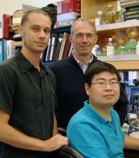 Scientists Identify How Organisms Convert Mechanical Signals to Electrical Signals