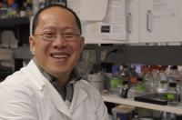 MU Scientists Inch Closer to a Therapy for Patients With Muscular Dystrophy