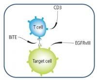 New Immune Therapy That Stimulates Body�s Immune System to Fight Brain Tumors Developed