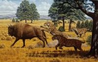 Lack of Prey Not Responsible for Extinction of Saber-Toothed Cats in North America