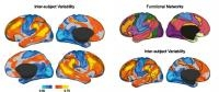 Different Connections in Brain Make Us Think and Behave Uniquely