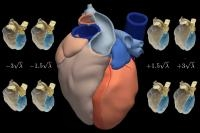Spanish Researchers Develop a High Resolution Atlas of Human Heart