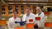 Signaling Molecule may Help Stem Cells Focus on Making Bone Despite Age, Disease