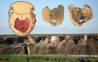Skull Pieces of Early Humans Carry Signs of Inbreeding: Research