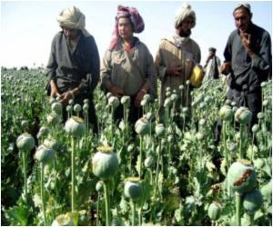 Afghan Drug Cartels Finance Poppy Farmers With Forward Contracts