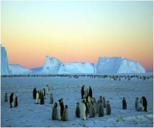 Arctic and Antarctic Ice Not Melting: Scientists