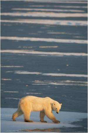 Animals are Bigger in Colder Climates: Read On To Know Why