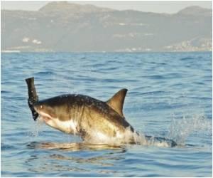 Australian Shark Victim's Arm Saved