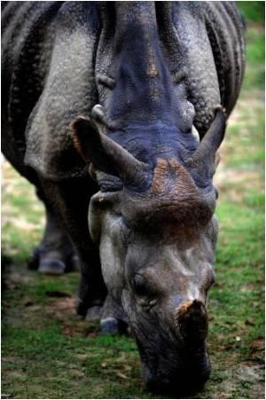 Wave of Deaths Hits Bangladesh Zoo